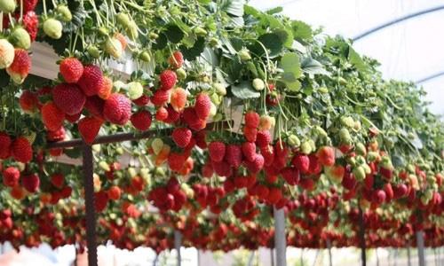 работа в Германии на уборке урожая