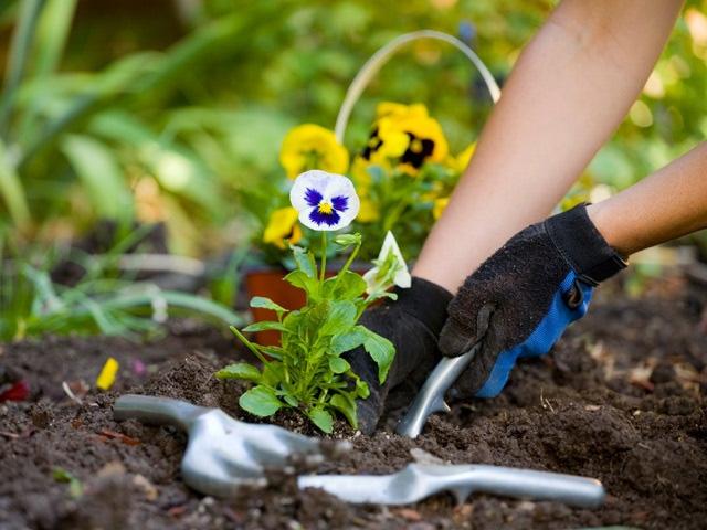 Посадка растений садовником