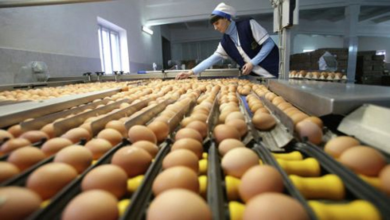 Сезонная работа на птицефабрике за границей