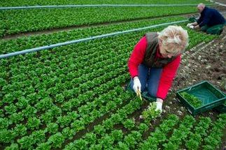Работа в сельском хозяйстве великобритании
